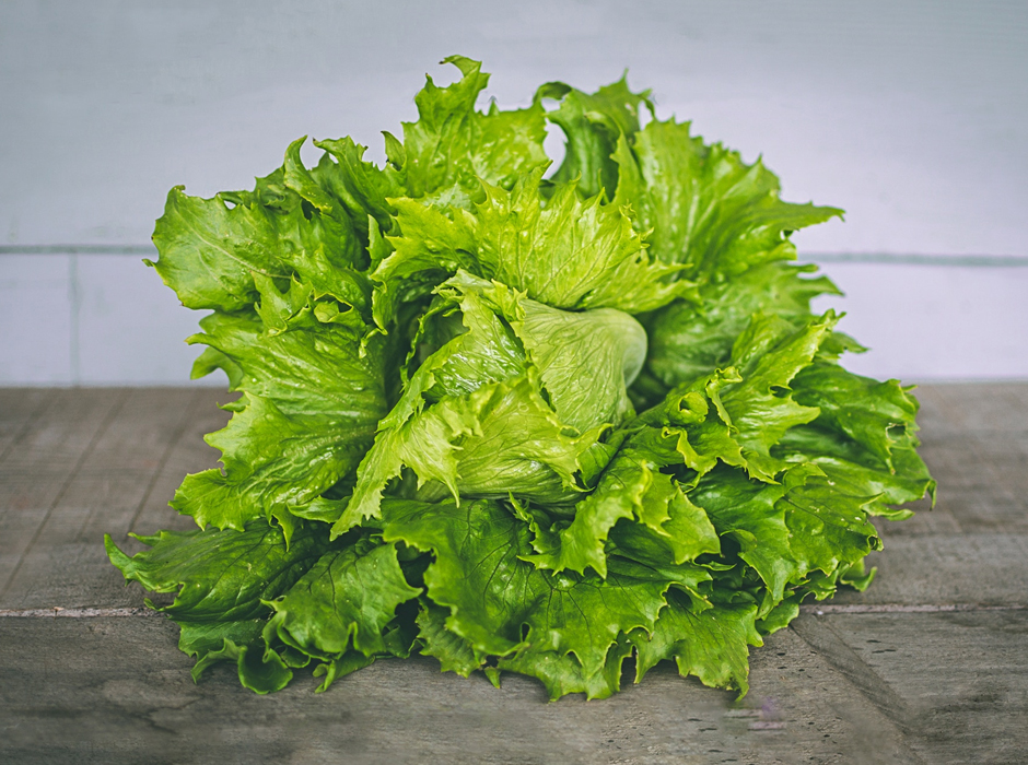 close up of leaf lettuce