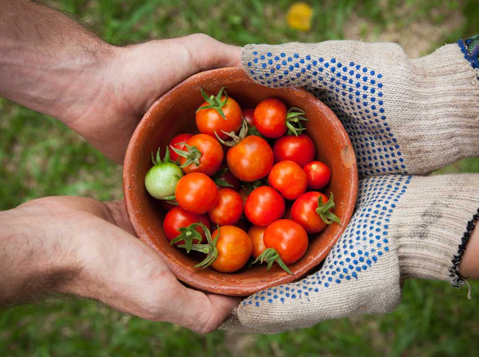 two people holding a bowl of fresh picked tomatoes
